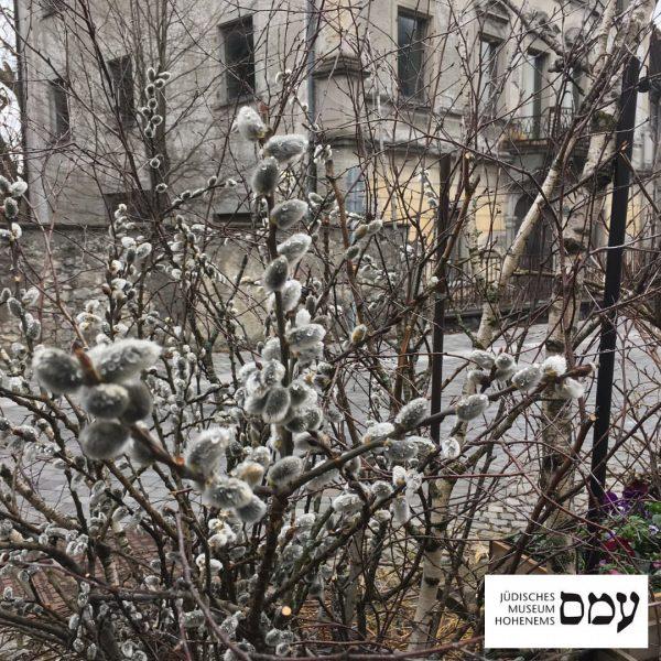 Vorfrühling im Jüdischen Viertel. Wir warten gespannt auf die im Sommer erwartete Entscheidung ...