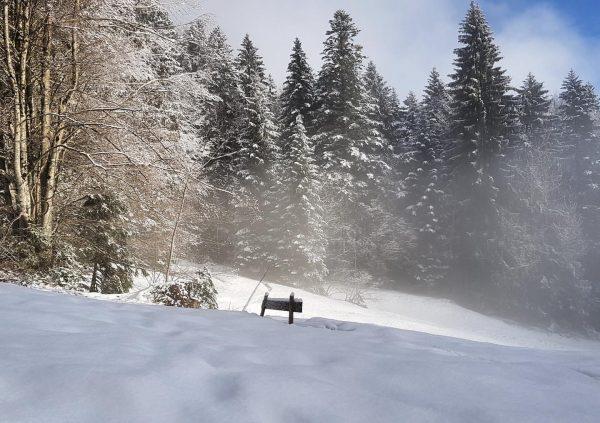 Rückblick auf das Wochenende: Es gab nochmal Neuschnee. 🔄❄️😃 Auch wenn sich der Frühling im Moment etwas...