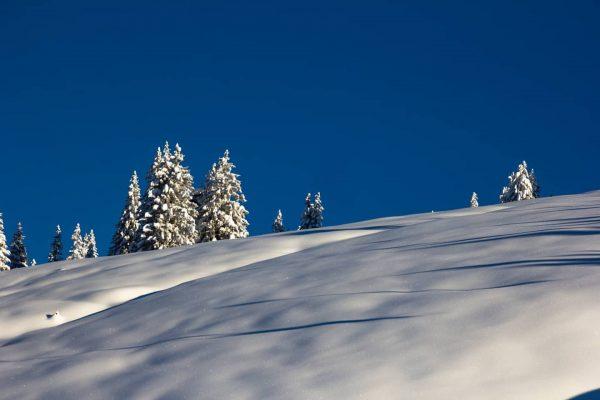 Perfekte Bedingungen zum #tiefschnee fahren gab's in #laternsgapfohl Anfang Januar in #visitvorarlberg #vorarlberg ...