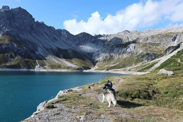 I miss this 😭💙 #husky #siberianhusky #austria #holidays #tb #september2020 #mountains #beautiful #hiking ...