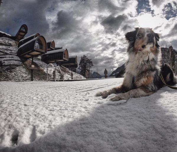 Wir schätzen alle Gäste & heißen Hunde ❣️-lich Willkommen, achten jedoch auf die Maximalanzahl im Resort und...