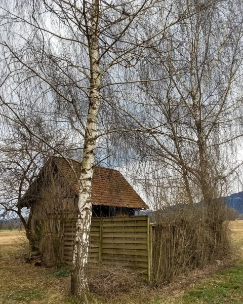 🐦 Riedhütte, passend zur derzeitigen Lektüre: 'eine Hütte für mich allein' von Joan ...