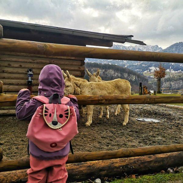 #tierliebe #kleineheidi #rosaliebe #rosa #nameistprogramm #vorarlberg #lebenmitkind #tollesländle #familienausflug #letitsnow Wildpark-Feldkirch