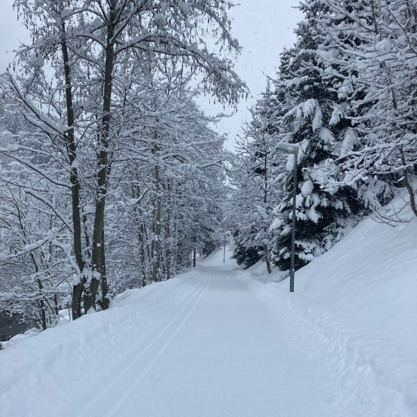 Went for a little walk! #mountainlife #snow #nature #outside #meinmontafon #beautiful #gorgeous #trees ...