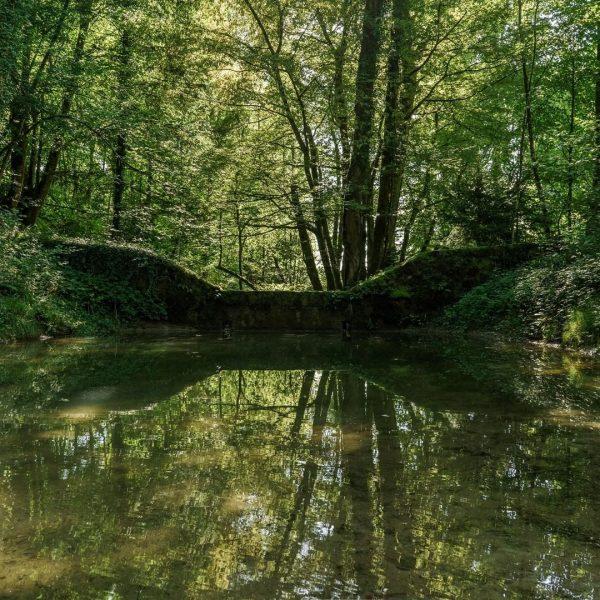7.000.000 Liter frisches Trinkwasser werden täglich aus dem Wasserschutzgebiet Mehrerau gewonnen. Damit werden ...