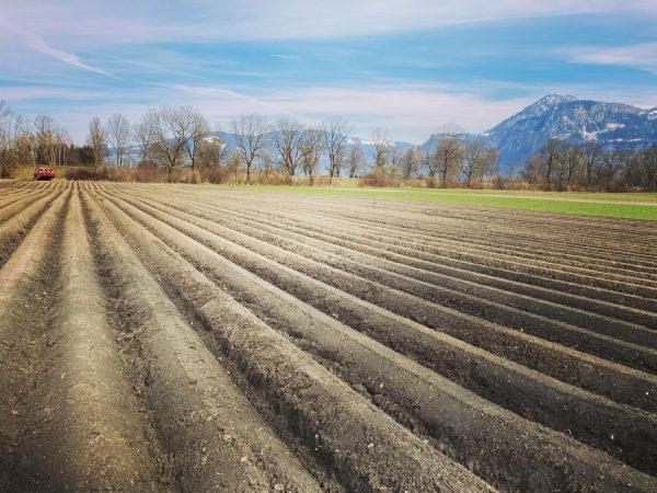 Wir haben heute im #heidensand unsere Frühkartoffeln gepflanzt. 🙌🙌🙌 Lustenau