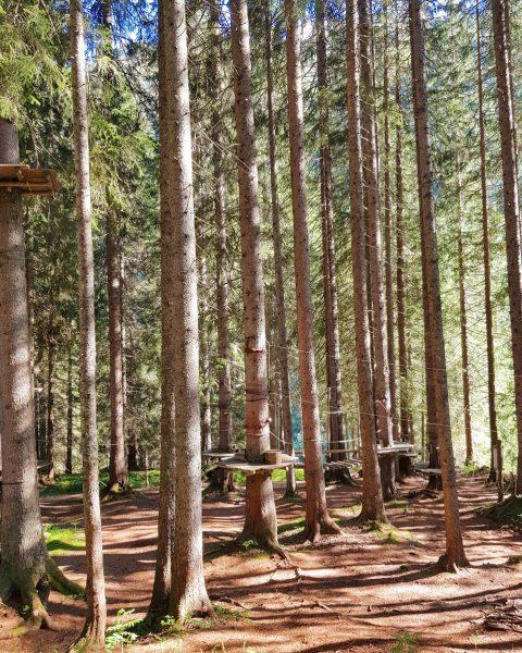 Wir genießen die schönen Herbsttage im Wald. 🌲 Am Wochenende haben wir immer für euch geöffnet. Kommt...