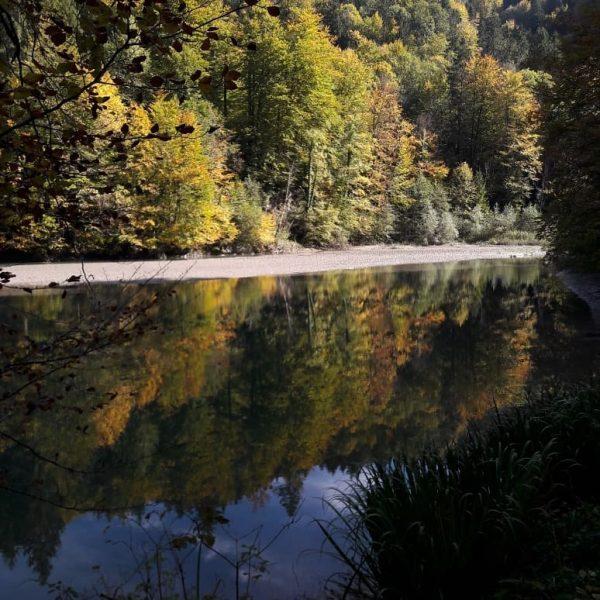 kleine Staufenseerunde #dornbirn #visitvorarlberg #vorarlberg #bregenzerwald @bodenseevorarlberg #austria #österreich #herbstwanderung #bodensee4u #nature #bodensee_de ...