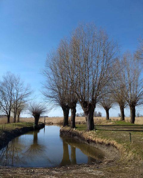 🐦Weiden - so richtig in Szene gesetzt....Willow trees - really staged 🌳 . ...