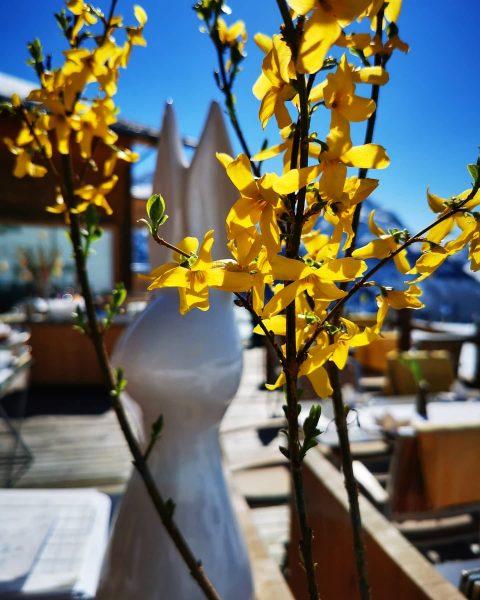 Frohe Ostern wünscht euch die Mohnenfluh ☀️🤗 #mohnenfluh #echtsein #echteberge #hotel #winter #mountains ...