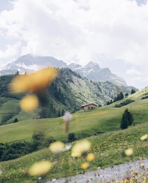 Auch wenn der Arlberg für seine kilometerlangen Skipisten bekannt ist, erblüht im Frühling ...