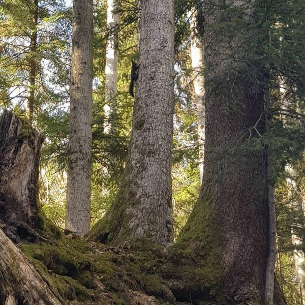 Wenn die Vögel zwitschern und die 🐿Eichhörnchen wieder im Walde rascheln ist der ...