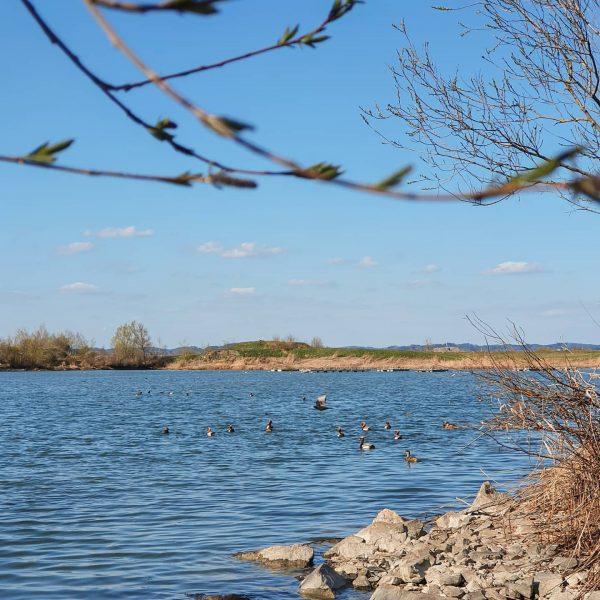 Vogelsichtungen beim Wochenendausflug: Kolbenenten, Haubentaucher, Höckerschwäne, Lachmöwen – welche Vögel hast du schon ...