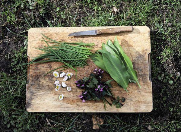 Die ersten Kräuter aus dem Garten: Gänseblümchen, Schnittlauch, Bärlauch und Taubnesseln oder Gundermann? 😬 #kräuter #wildkraut #garten...