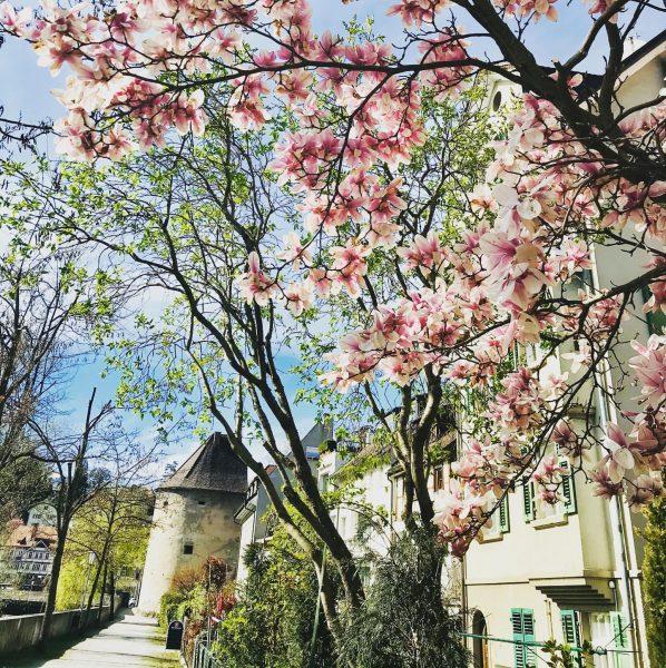 Frühling in Feldkirch... Jedes Jahr ist es wieder ein Genuss durch Feldkirch zu ...