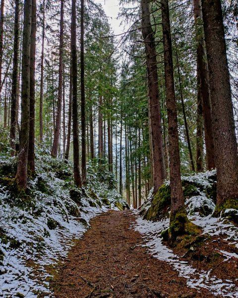 Die vielen Bäume und die wenigen Menschen - die machen den Wald so ...