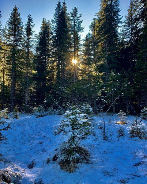 Wenn der Frühling im Arlberg Gebiet auf sich warten lässt... #unserarlberg #arlberg #winter #wintereinbruch #schnee #landscape #landscapephotography...