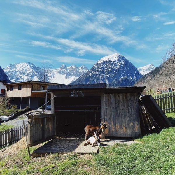 Bergurlaub mit Kindern = viel Natur, unbeschreibliches Bergpanorama, Tiere aus der Region erleben, ...