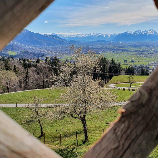 Panoramaausblick vom Dreiländerblick oberhalb von Wolfurt bis zu den Schweizer Berggipfeln und den ...