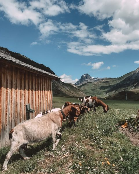 This picture was taken last year on the walk from Oberlech to the ...
