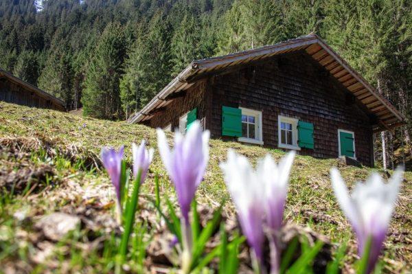 Mit jeder Blume 🌷 wächst auch die Hoffnung... die Hoffnung, auf einen wundervollen Sommer in den Montafoner...