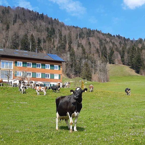 """""""Von den Höfen unserer Heumilchbauern"""" Da leben und arbeiten, wo andere Urlaub machen. Ein ziemlich """"KUHles"""" 🐄🌾☀️..."""