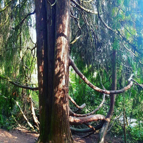 Ab in den Wald #naturtutgut #sauerstoffspender #baumliebe #natürlichekunstwerke #ichgehraus #durchatmen #grüntanken #brandnertal #mountainvillage ...