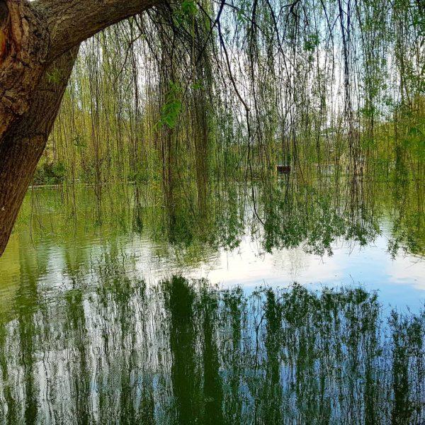 Wasser ist Leben #biotelnaturappartements #ausdenelementenderberge #brandnerquellwasser #spendetleben #whirlwanne #biosauna #erholungpur #wasserausdemhahn #brunnenvordemhaus #vitalität ...