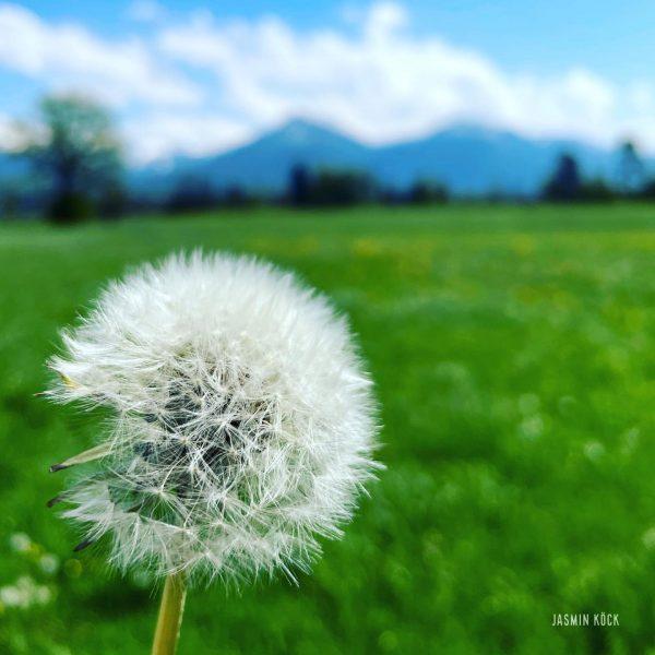 #pusteblume #wünschdirwas #dornbirn #karren #aussicht #berge #6850dornbirn #visitdornbirn #vorarlberg #visitvorarlberg #österreich #austria #frühling #natur #sonnenschein #sonnenstrahlen #sonnenstrahleneinfangen...