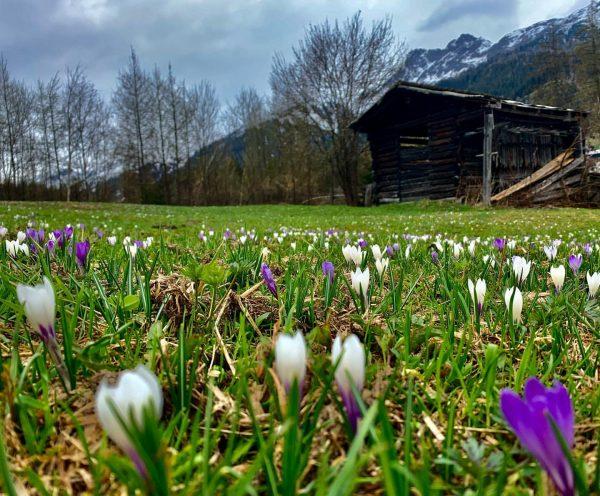 Die Natur am Arlberg erwacht zu neuem Leben. Auch wenn es aktuell wieder schneit. ❄️ #unserarlberg #arlberg...