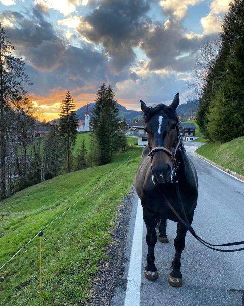 Mit Nina on Tour.🐴🧡 #meinsibratsgfäll #sonnenuntergang #bregenzerwald Sibratsgfäll, Vorarlberg, Austria