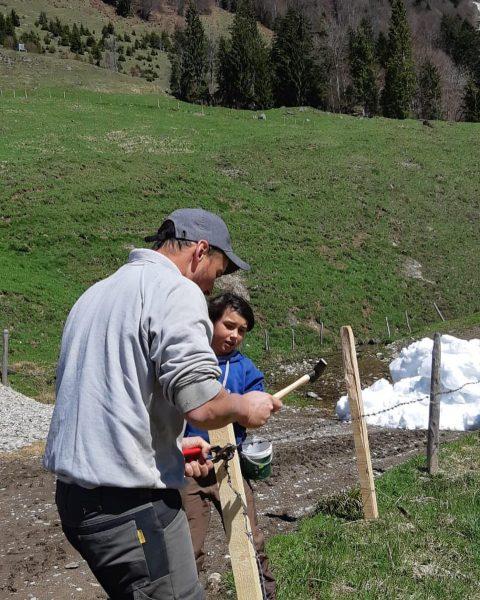 """""""Von den Alpen 🏔 unserer Heumilchbauern"""" [""""haga""""] Der Mehraufwand für die Weidehaltung der Tiere 🏔🐄🌾🌤 ist gerade..."""