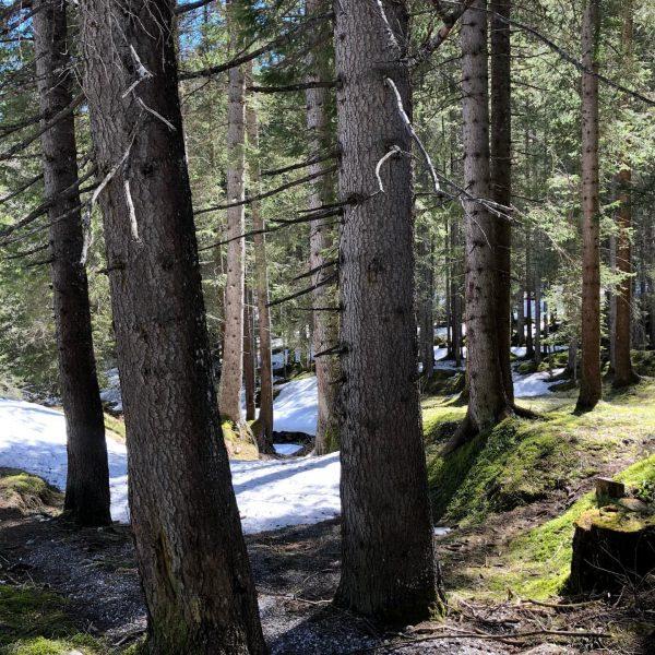 Lindauer hutte mtb tour #lindauerhütte #mtb #nature #stillsnow #sunnyday #sunday #gauertal #montafon #silvrettamontafon ...