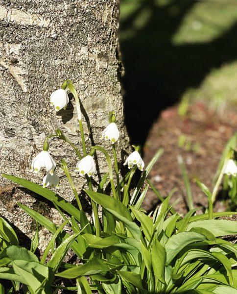 Blumengrüße aus unserem Garten. Wir freuen uns über die warmen Sonnenstrahlen und die ...