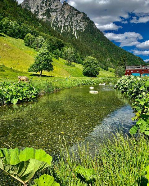 Ab 26.06.2021 erwarten euch in Klösterle am Arlberg tolle Wandertouren auf herrlich duftenden ...