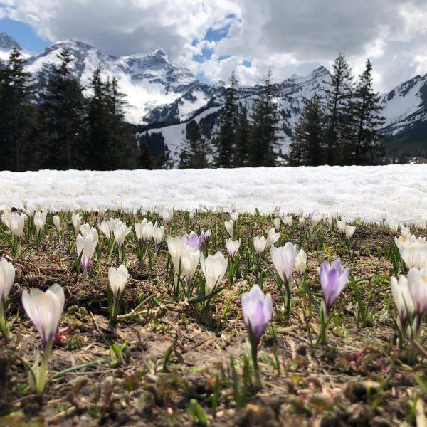 Frühling am Berg 🤩 Ganz etwas Besonderes!  . . . . . ...