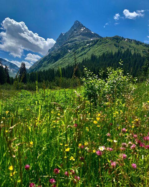 Von blühenden Wiesen träumt ein jeder, der an Natur und Berge denkt. In ...