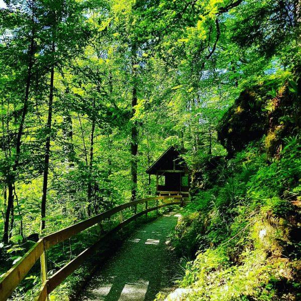 #wanderlust #wandern #meintraumtag #naturephotography #natur #naturvielfaltvorarlberg #naturliebe #naturerlen #visitvorarlberg #venividivorarlberg #meinvorarlberg #bergwelten #bergliebe ...