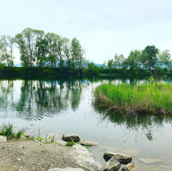 Beautiful nature🌿🦆 Alter Rhein
