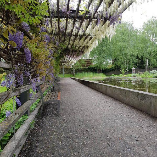 🌱Sieht das nicht einfach einladend aus ❤️ #inatura #blauregen #plants #plantlove #gardenlove #gartenparadies ...
