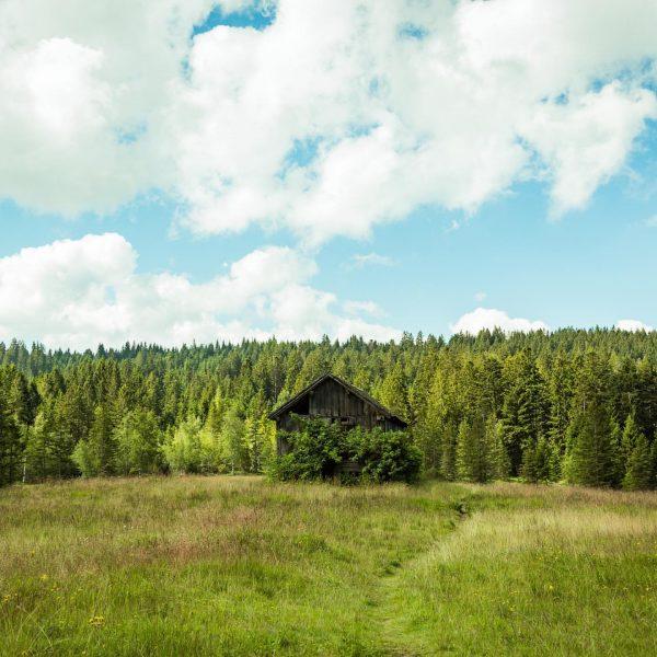 """Donnerstag 10 Uhr """"Kräuterwanderung"""" durch das Fohramoos. www.naturerfahren.at Foto: Jürgen Rabatscher #kräuterwanderung #bödele ..."""