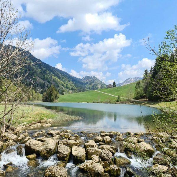 Im Vorderbregenzerwald sind die meisten ÄlplerInnen schon auf ihren Alpen. Vor allem im ...