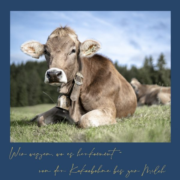 Die Brandnertaler Kühe dürfen bald auf die Alpe. Was gibt es schöneres als ...