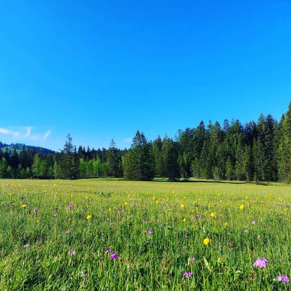 Wandern ❤ #wandernmachtglücklich #wandern #dornbirn #fohramoos