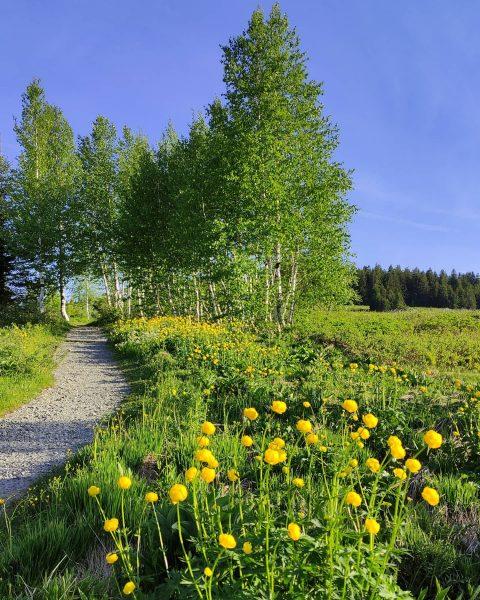 #hochhäderich #bregenzerwald #vorarlberg #austria #nature #naturelover #outdoor #flowers #trees #green #home #placetobe Hochhäderich