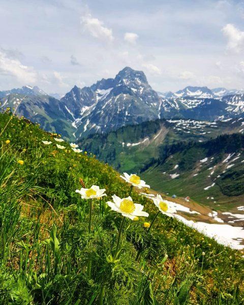 TraumhafterAussblick. ⛰☀️🌼😊 @daily_allgaeu @kleinwalsertal #widderstein #bergdorfbaad #dailyallgäu #zieleerreichen #bergverliebt #vorarlberg #kleinwalsertal #summit #bergsüchtig ...