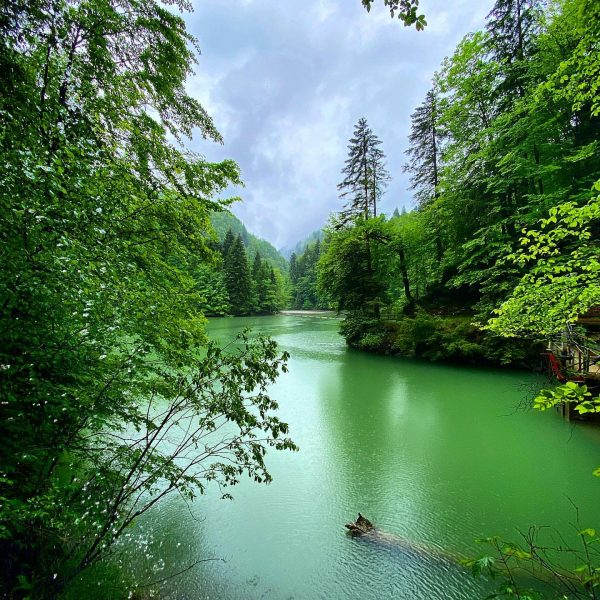 Green is good for the #soul , luckily you get lots of green ...
