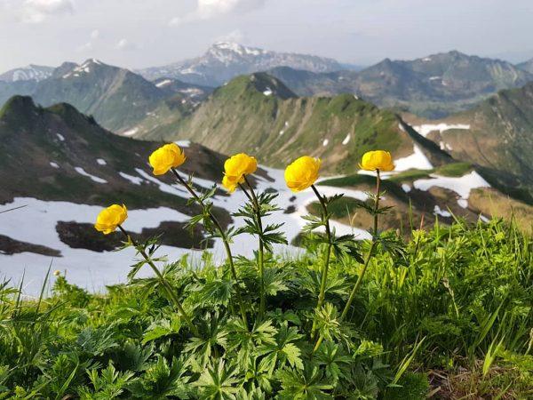 Trollblumen.⛰❄🌼 @daily_allgaeu @kleinwalsertal #güntlespitze #bergdorfbaad #dailyallgäu #zieleerreichen #bergverliebt #vorarlberg #kleinwalsertal #summit #bergsüchtig #mountainlove ...