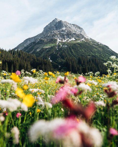 Liebt ihr die bunten Blumenwiesen auch so sehr wie wir? Jedes Jahr sind ...