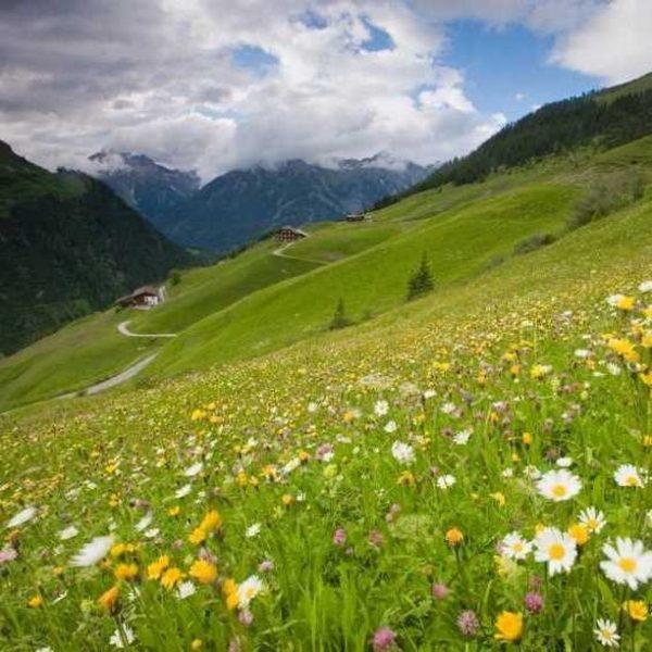🌿 Grüne Grasberge neben schroffen Kalkgipfeln, so vielfältig und abwechslungsreich präsentiert sich die Bergwelt des Großen Walsertals....